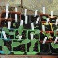 2008 04 14 Mes courgettes, Potirons et Melons