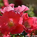 [projet 52-2106] semaine 25 - fleur