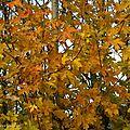 Encore un peu d'automne