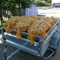80 récolte pommes de terre
