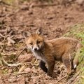 2014-05-30 LUX-1006