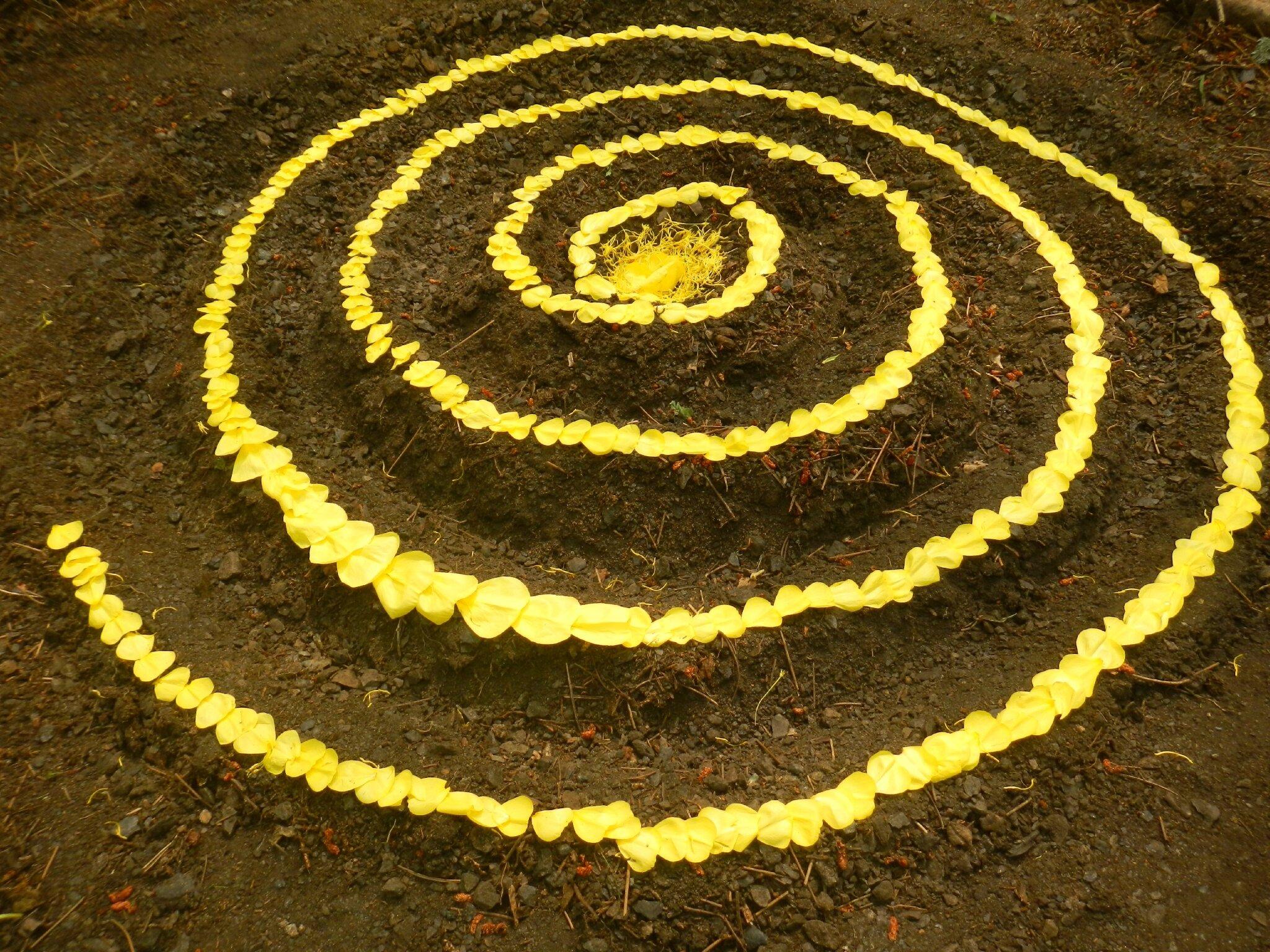 spirale de fleurs d'onagre yurtao