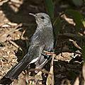 51animaux, Nuwera, oiseau, Sri Lanka