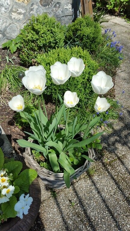 Windows-Live-Writer/Joli-printemps-au-jardin-_601C/20170402_133818_2