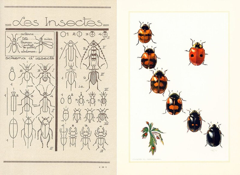 HOTEL A INSECTES (15)