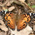 Butterfly (163)