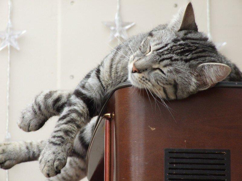 Chut.... je dors!!!!! (mai 2007)