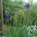 Petit tour au jardin à la fraiche ...