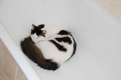 19-09-11 Dans ma baignoire