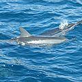 #4 : Hawaii ...l'<b>océan</b>, le bateau, les poissons et les dauphins !!! Une de nos plus inoubliables sorties !