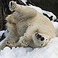 ours blanciqOAJm1qfthy3o7_1280