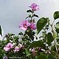 1-Fleurs de Léon 020717