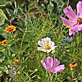 La <b>ballade</b> des fleurs