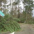 Tempête dans le Sud-Ouest, janvier 2009 (40)