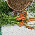 29 - juillet - des carottes comme on aime les manger
