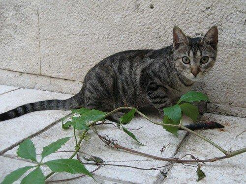 chat Makarska 1
