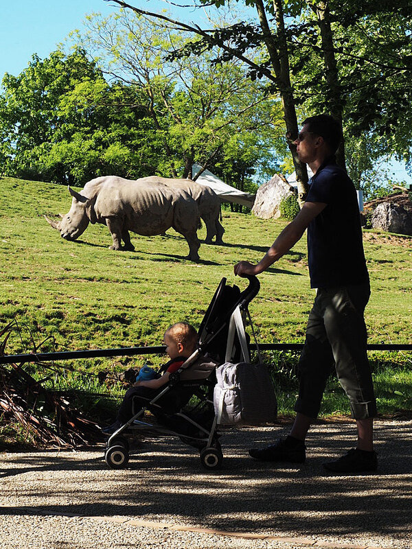 zoo-beauval-animaux-rhinoceros-31