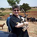 Les chèvres des arganiers
