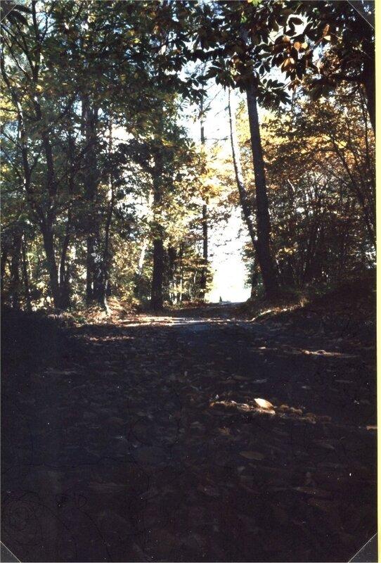 sous les bois aux Sarthes