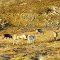 17-10-08 Sortie Montagne et rennes (125)
