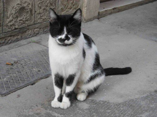chat Trogir 8