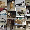 chats à l'adoption (Lunel)