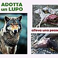 Adopte un loup, élève une brebis !