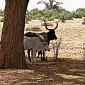 Sénégal (5