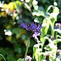 fleur 1 nathalie dentzer