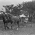 <b>WW1</b> : Women at Work