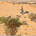 Touareg du Niger, rencontres au fil du temps ...