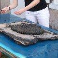 préparation de l'éclade de moules chez Sylvie à Port des Barques