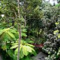 8653-Jardin-Tropical