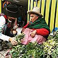 Préserver la richesse ancestrale des <b>plantes</b> médicinales de la Cordillère des Andes