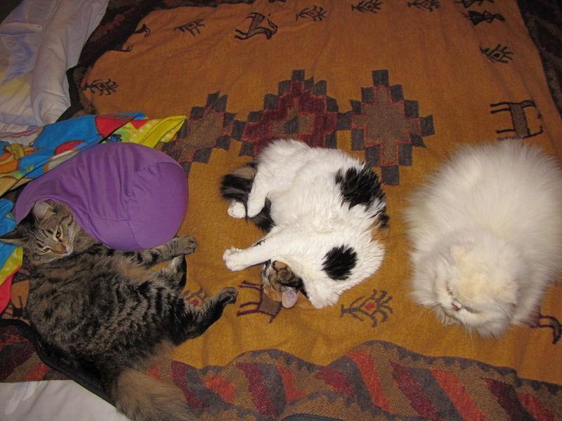 Les triplés sur le lit