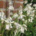 les fleurs de mon jardin5