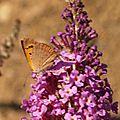 Papillons non identifié