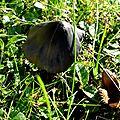 champignon-05870 (11)