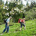 Randonnée vercors - vercors quatre montagnes (pic st michel - col de l'arc)