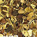 vente d'infusion <b>ayurvédique</b>, de merveilleuses plantes utilisées en <b>ayurvéda</b>