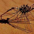 ecrit-ombre-20025