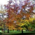 Scène d'automne au Parc de la Source