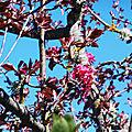 Fleurs de Léon 300318