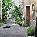 Chats du vieux nyons (26)