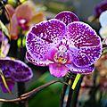 <b>Orchidées</b> d'ailleurs et de chez nous.