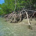 La_Caravelle_mangrove_plage