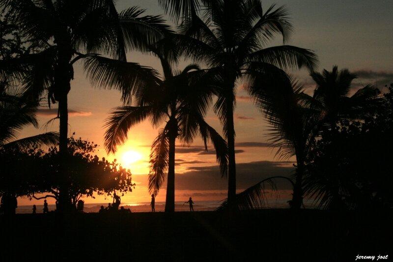 soleil et palmiers etang salé