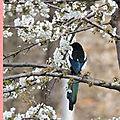 Du printemps à l'hiver - histoires du cerisier