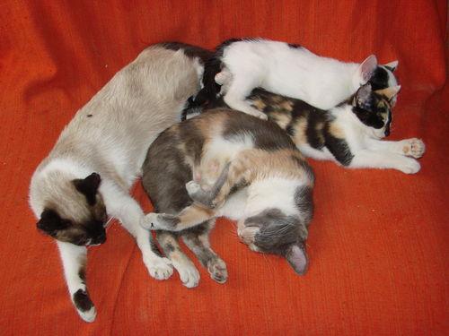 2008 05 26 Papillon et Blanco avec les deux chatons qui ne sont pas encor partie