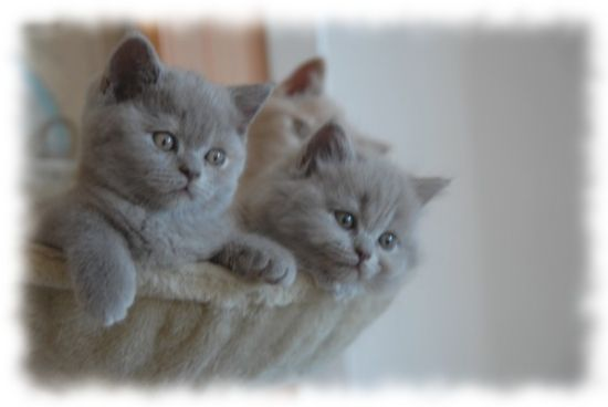 chatons-bourges-france-1220654583-1093391[1]